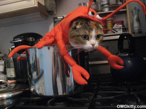 cute scottish fold cat in a lobster halloween costume