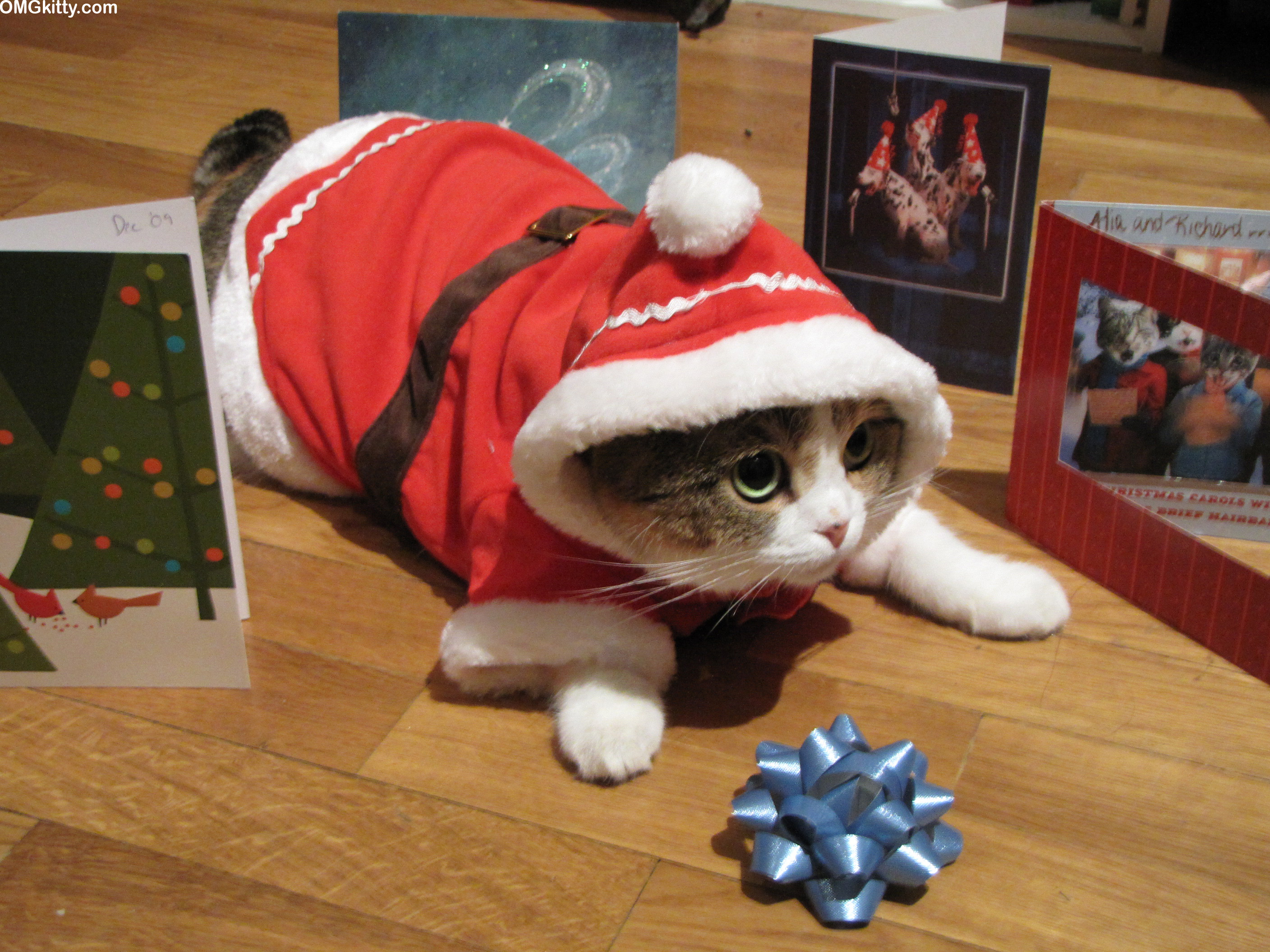omgkitty santa claws wishes you a merry christmas yes it s a